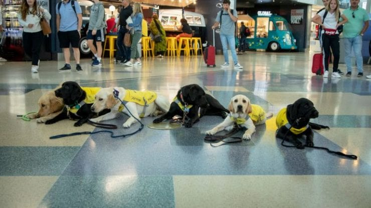 Aeroporto-New-York-JFK-pet-friendly