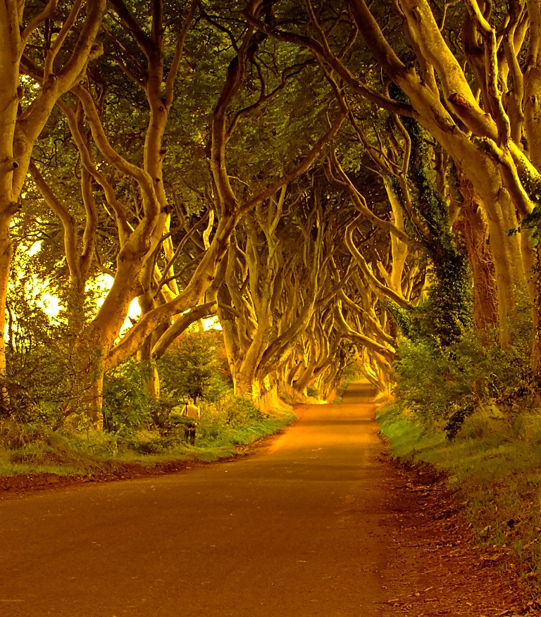 Paesaggi irlandesi, The Dark Hedges