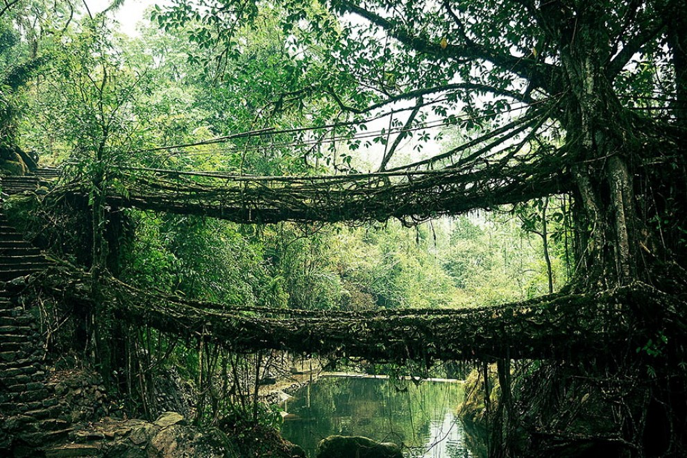 Root-bridge-India