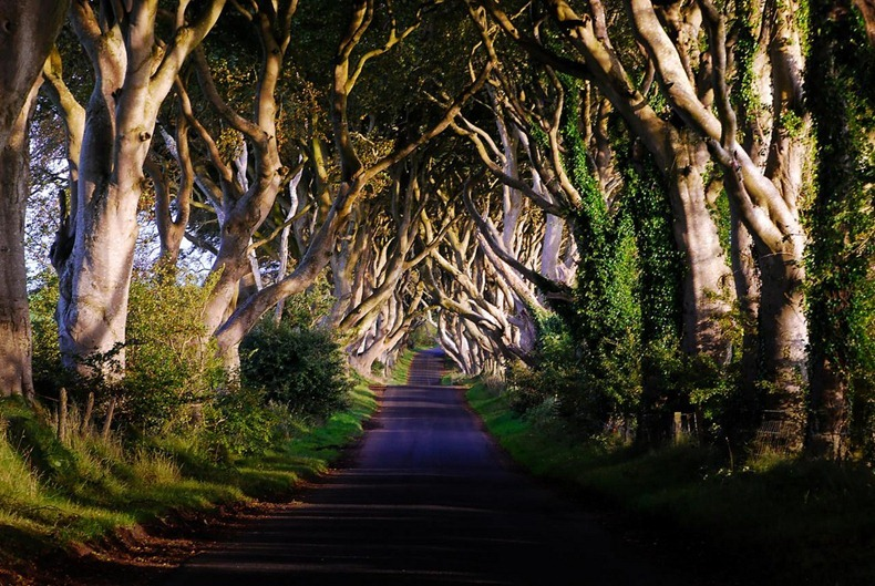 The Dark Hedges - County Antrim, Irlanda del Nord