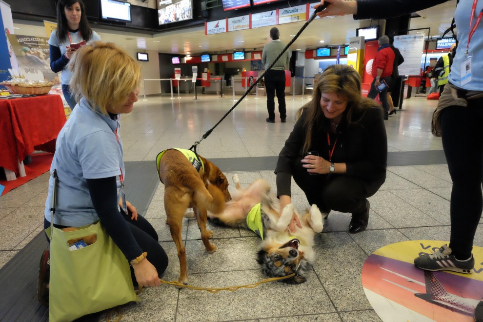 Stress da volo, arriva la Pet Therapy in aeroporto